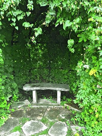 garden bench: Stone bench in green summer garden decorated with ivy.
