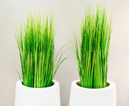 decor: Decorative green grass in white vases. Modern home decor. Stock Photo