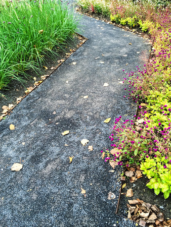 ornamental garden: Path in a colorful summer garden with blooming flowers.