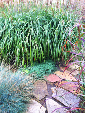 ornamental garden: Decorative grass and stone path in the summer garden.