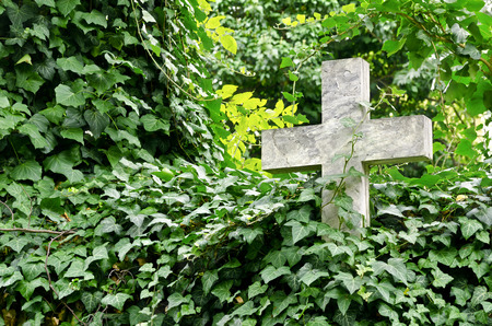 Stone cross covered by Ivy at old cemetery