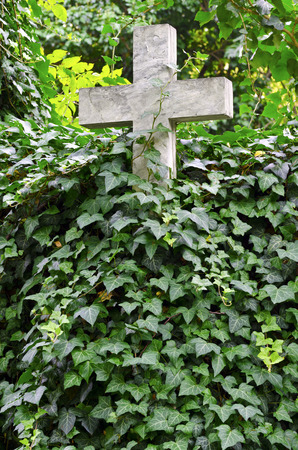 Stone cross covered by Ivy at old cemetary