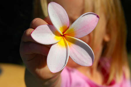 Hand of a little child with a Frangipani flower (focus on flower) photo