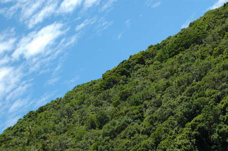 bushy plant: Rainforest and blue sky with clouds