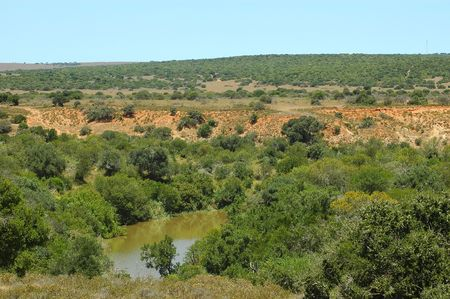 savannas: Scenery of African bush and grassland with a water hole in the Shamwari Game Reserve in South Africa