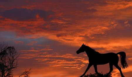 trotting: A beautiful sunrise with red sky background and a black horse silhouette