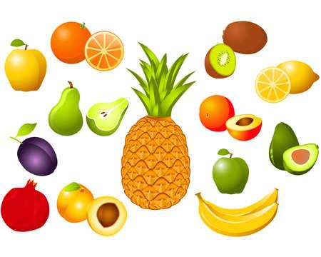 avocados: Fruits Illustration
