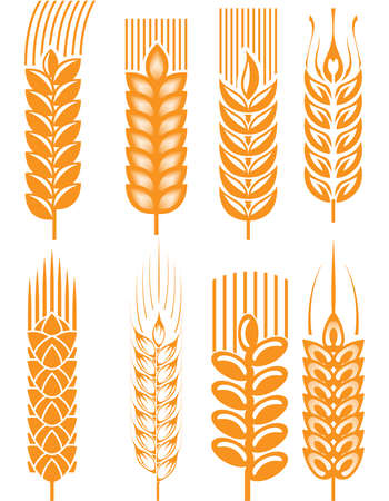 cereals: Wheat ears Illustration