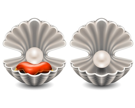 scallop shell: Open seashell with pearl