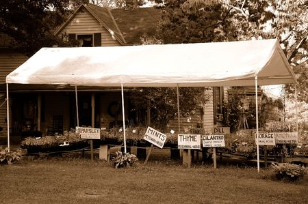 Herb Farm - A tent shades the herbs from the sun. Image shows hand lettered signs with names of each herb. Sepia tinted to look vintage. photo