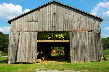 tobacco plants: Tobacco Barn
