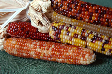 Indian Corn - Decorative colorful dried corn used for fall decorating. photo