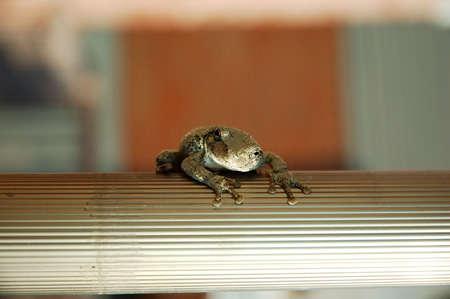 warts: Toad