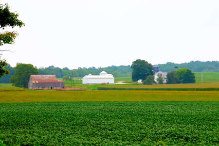 The Harvest - A barn with bales of hay sits between the corn fields and behind a large crop of soybeans in the late summer.   photo