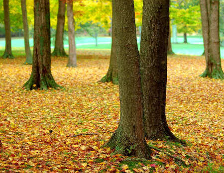 A blanket of leaves covers the woods at a golf course in October. Stock Photo - 598959