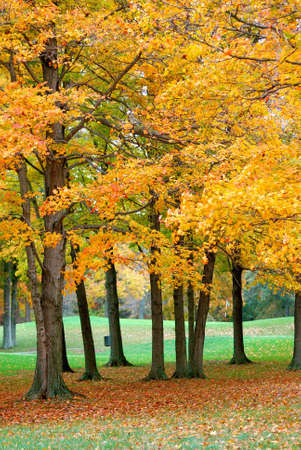 Golden leaves cover the greens of a golf course in the autumn. photo