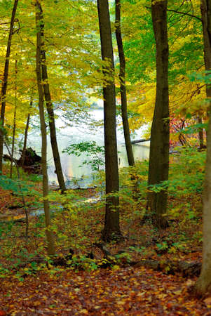 Waters Edge - The trail through the woods leads to the water during an autumn walk. photo