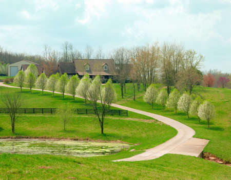 grassy knoll: Kentucky Farm On A Sunny Day -  A winding road lined with flowering pear trees leads to a Kentucky farm house on a grassy knoll.