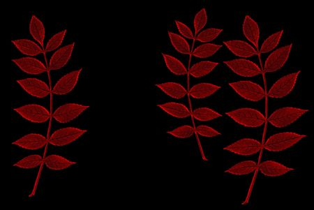 Abstract illustration of branches of a plant in red on a black background. Stock Photo