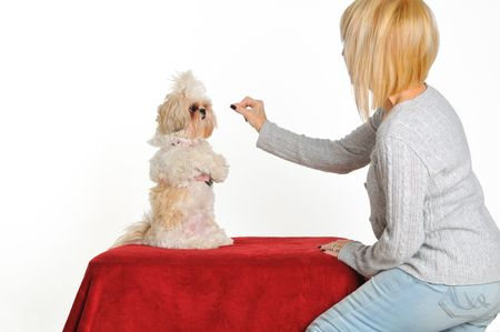 behave: A dog trainer teaching a puppy to sit up for a treat.