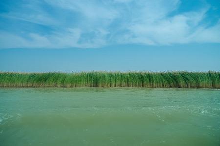 canne: Le canne del lago di sabbia