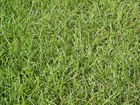 A shot of some high grass from a yard.  Maks a great textured background.
