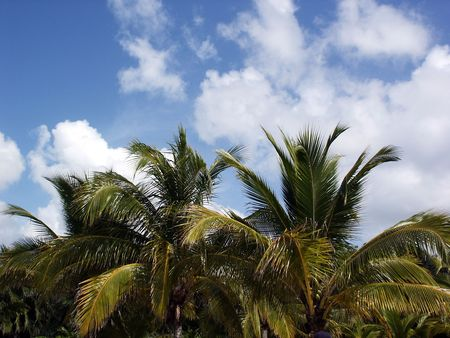Tree line on a beach in Cancun Mexico. photo