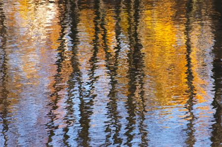 Reflection from gold autumn birches in the river in a sunny day photo
