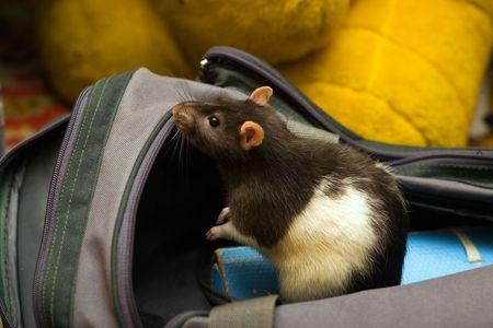 ratty: Controllo del sacchetto aperto sul mantenimento delle cose interessanti