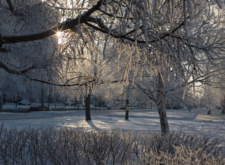 Winter landscape in the frosty morning in the first beams of the sun