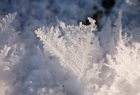 Hoarfrost close up in winter photo