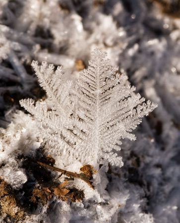 Hoarfrost close up in winter Stock Photo