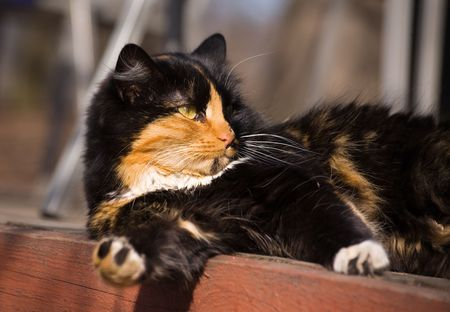 Cat basked in the sun in spring day photo