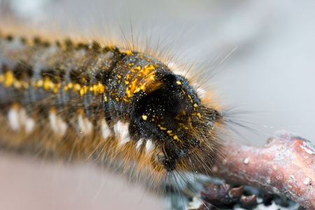 Caterpillar on a branch in the summer photo
