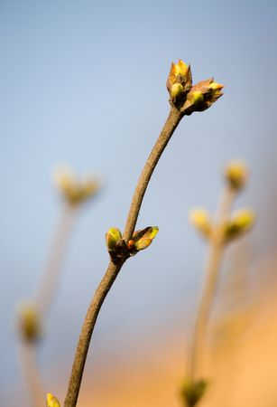 The first buds and insects in the spring photo