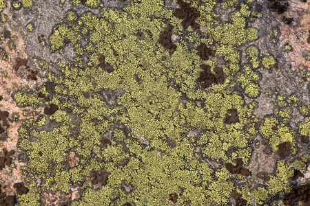 Rock with a green lichen close up