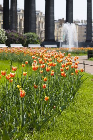 Square with tulips in the center of St.-Petersburg photo