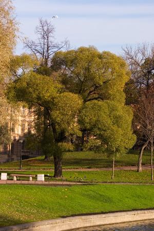 riverside trees: embankment of the park of Saint-Petersburg in october
