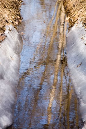 riverbed: spring trunks reflecting in an icy riverbed