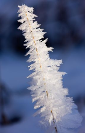Blade covered with hoarfrost in the form of a fur-tree photo