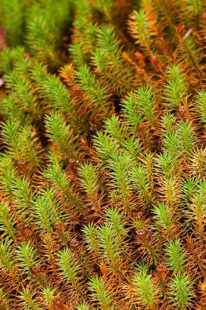 morass: wet green moss on a bog close up