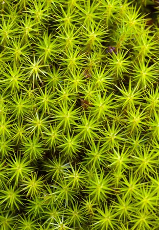Background from a green moss on a bog photo