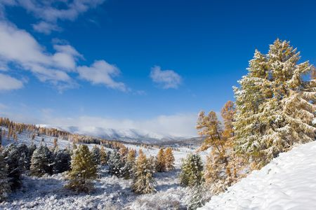 Landscape in mountains with the first snow on autumn trees photo