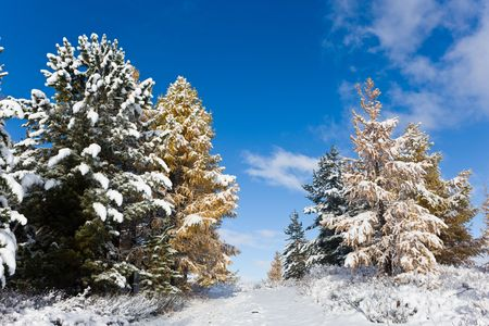 The first snow on autumn trees in mountains photo