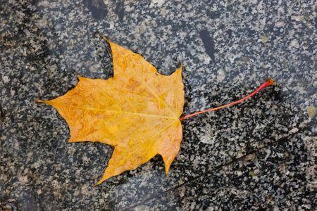 Wet yellow autumn leaf on marble sidewalk photo