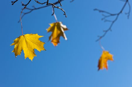 Last three leaves in the end of autumn photo