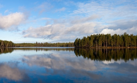 Panorama of wood lake with pines ashore photo
