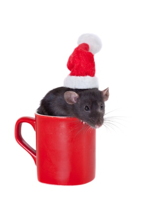 Black rat in a cap of Santa Claus photo
