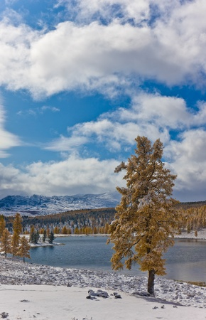 Larch on the bank of mountain lake in the winter photo