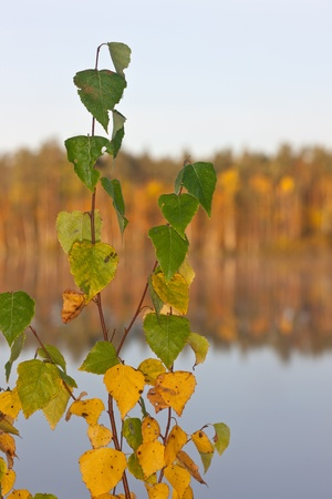 Branches of a birch against lake in the autumn photo